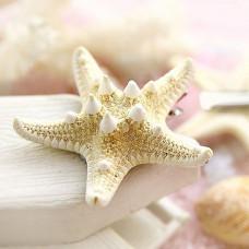 HZ006 Заколка для волос Морская звезда (натуральная) ~45-75мм